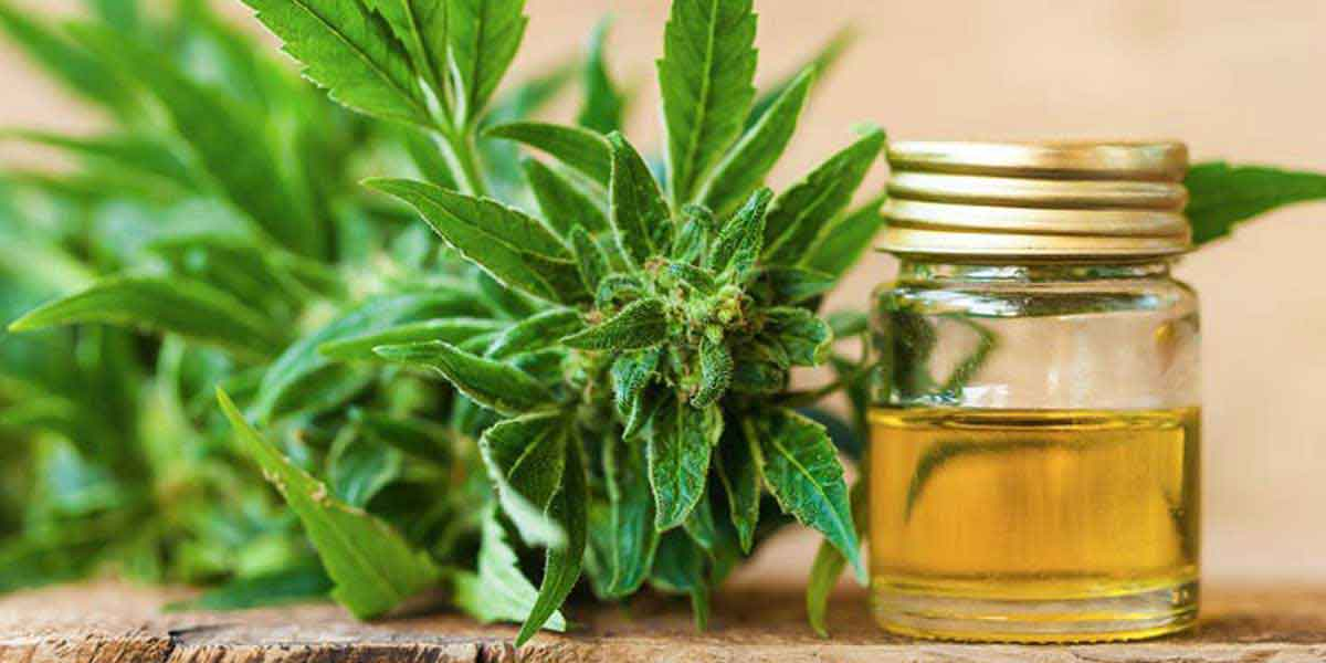 Buy Cannabis CBD Oil & CBD Vape Oils in UK from £7 99 CBDOil